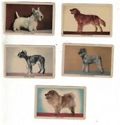 5 1950s Sargent Preston's Dog Cards Trading Cards