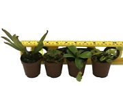 Live Carnivorous Plant Ultimate Package Sarracenia, Nepenthes, Vft, Sundew