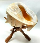 Seashell Collection Lot Of 3 Large Queen Conch/ Pacific Triton/ Fig Shell