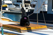 Gull-scare Cat Decoy Scares Birds Off Boats And Patios- Boat Bird Deter 2 Each