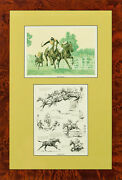 Wissahickon C.1930 Proof Plates By Paul Brown For The Derrydale Press
