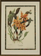 Easter Orchid C 1960 And039c.mossiaeand039 Marble Mat And Framed