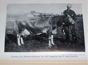 1907 Maine Farming Dairy Cows Cattle Insects Gipsy Moths Apples Maine Homes