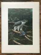 Ned Smith The Goshawk's Tribute Limited Edition Art Print 1977 Signed 884/986