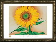Framed A Sunflower From Maggie By Georgia Oand039keefe Museum 24x32 Art Print