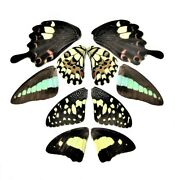 5 Pairs Real Butterfly Wings, Assorted Wings, Mix, Lot, Insect Taxidermy, Art An