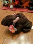 1998 Roam The Buffalo Bison Ty Beanie Baby Rare Retired Collectible With Tags