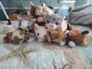 6 Cat Beanie Babies All Pvc Pellets Some With Tush And Tag Errors