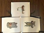 Vintage Lot Of 3 Richard Sloan Duck Art Prints 1980 And 1981 Signed Very Nice