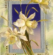 1910s Winsch Back Embossed Dresden Daffodils Easter Silver Tone Border