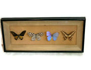 Lot Of 4 Real Butterflies Set In A Frame Blue Morpho And Others 27 X 12