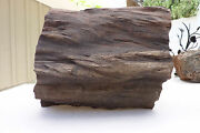 Large Petrified Wood Log Gorgeous 46+ Lb Mineral Rock Antique Collector Fossil