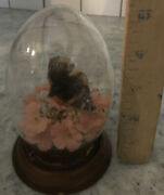 Vintage Real Butterfly Display With Dry Flower Butterfly Glass Dome 5.5andrdquo Tall