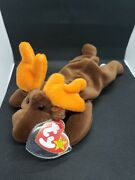 Rare Retired Ty Beanie Baby Chocolate The Moose 1993 Pellets W Errors And Tag Mint