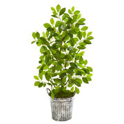 37 Mini Ficus Artificial Tree In White Washed Vintage Metal Pail Nearly Natura