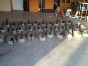 Canadian Goose Shell Decoys