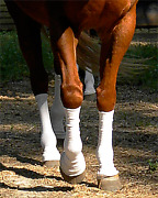 Sox For Horses - Silver Whinnysandreg - Barriers Against Biting Insects And Uv