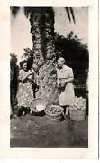 Out Of Frame Man Mature Ladies Baskets Full Of Citrus Fruit Vintage 1940s Photo