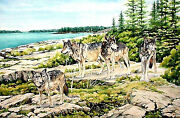 Isle Royale National Park Wolf Watch On Scoville Point By Wanda's Watercolors