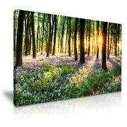 Bluebells Forest Tree Sunlight Canvas Modern Home Art 5 Size To Choose