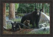 New Discoveries By Kevin Daniel 28x40 Bear Cubs Black Bears Framed Art Picture