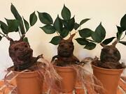 Mandrake Root Tree Inspired By Harry Potter Baby Prop Decoration Party