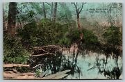 C1910s Cape May Point Nj Lake Lily A Shady Nook Jk Hand Colored Postcard A46