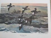 White Winged Scoter By Chet Reneson Artist Proof Number 2 Of 20 New And Mint