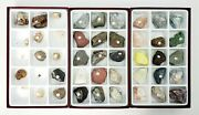 Collection Of Fossils, Minerals And Metamorphic Rocks 45 Display Specimens