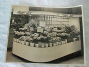 Old Baltimore Md Photograph Hb Hutzler's Brothers Flower Shop