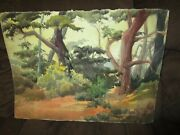 Signed Original Watercolor Painting By Peg Humphreys, Monterey Trees 22.5x 30