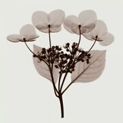 Art-print-meyers-floral-hydrangea-stem-trio---a-on-paper-canvas-or-framed