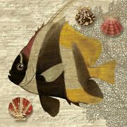 Art-print-nicoll-coastal-angelfish-trio-iii-on-paper-canvas-or-framed