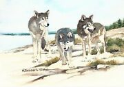 Wolf Pack On Scoville Point In Isle Royale National Park