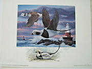 1996 Conn Duck Stamp Print By Keith Mueller W/color Remarque - Old Squaw Decoy