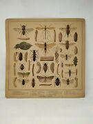 Collectible Old British School Educational Harmful Insects Poster Chart Paper