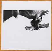 Signed Paolo Pellegrin - Birds Of Prey Kyoto Japan 2019 6 X 6 Magnum Print
