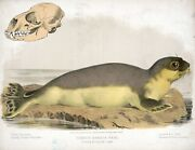 9576.decoration Poster.room Wall Art.home Decor.harbor Seal.science.nature Art