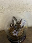 Vintage Real Butterfly Display Taxidermy Mounted Glass Dome