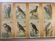 Lot Of 132 Vintage Arm And Hammer Bird Trading Cards 1920s Book Church And Dwight
