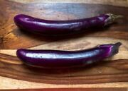Eggplant Seeds- Long Purple Eggplant Seeds Cool Beans N Sprouts Brand. Home G
