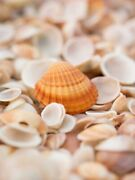 Art-print-sea-shells-on-the-beach-frank-42x57in-vertical-image-on-paper-canvas-