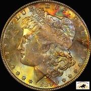 1899 O Morgan Silver Dollar Pcgs Ms 64 Cac Old Blue Holder End Roll Toned