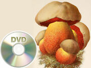 42 Antique Books About Mushrooms - Dvd