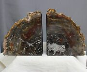 8.6 Beautiful Petrified Wood Bookends Arakaria Fossil Wood Bookend Slabs, Ptw95