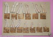 Complete Antique Goebel Sample Card With Half Doll Bisque Arms Tmk1