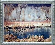 Canadian Geese On Lake Mcgraw Wildlife Birds Wall Decor Silver Framed Picture