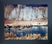 Canadian Geese On Lake Mcgraw Wildlife Birds Wall Decor Espresso Framed Picture