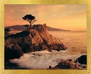 Lone Cypress Tree Scenery Nature Wall Decor Golden Framed Art Print Picture