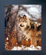 Gray Wolf In Snow Wild Animal Wall Decor Espresso Framed Picture Art Print 20x24